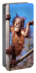 Baby Orangutan Climbing Portable Battery Charger by Stephanie Hayes