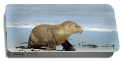 Baby Sea Lion On Seals Bay Portable Battery Charger
