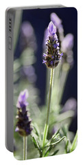 Portable Battery Charger featuring the photograph Backlit Lavender By Kaye Menner by Kaye Menner