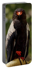 Bateleur-african Eagle Portable Battery Charger