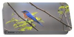 Beautiful Eastern Bluebird Portable Battery Charger
