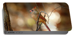 Beautiful Female Cardinal Portable Battery Charger by Darren Fisher
