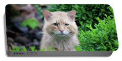 Portable Battery Charger featuring the photograph Beautiful Kitty by Trina Ansel