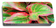 Portable Battery Charger featuring the photograph Beautiful Red Aglaonema by Ray Shrewsberry