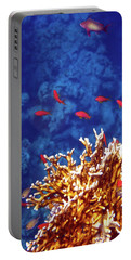Beautiful Red Sea Anthias Portable Battery Charger