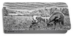 Belted Galloway Beef Cattle Portable Battery Charger