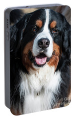 Portable Battery Charger featuring the photograph Bernese Mountain Dog Portrait  by Gary Whitton