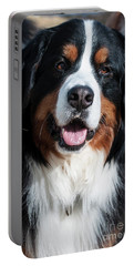 Bernese Mountain Dog Portrait  Portable Battery Charger