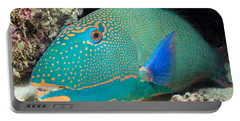 Bicolor Parrotfish Portable Battery Charger