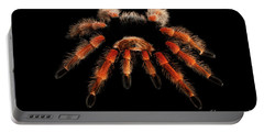 Big Hairy Tarantula Theraphosidae Isolated On Black Background Portable Battery Charger
