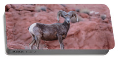 Big Horn Sheep Valley Of Fire Portable Battery Charger