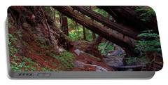 Big Sur Redwood Canyon Portable Battery Charger
