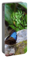 Portable Battery Charger featuring the photograph Black And Blue Butterfly Eating by Raphael Lopez