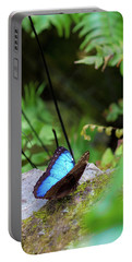 Portable Battery Charger featuring the photograph Black And Blue Butterfly by Raphael Lopez
