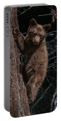 Black Bear Cub Sequoia National Park Portable Battery Charger