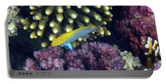 Black Damselfish Juvenile Red Sea Portable Battery Charger