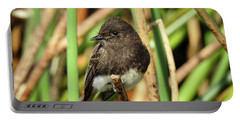 Black Phoebe Close Up Portable Battery Charger