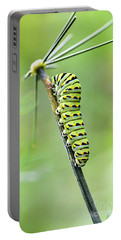Black Swallowtail Caterpillar Portable Battery Charger