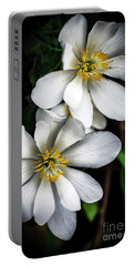 Portable Battery Charger featuring the photograph Bloodroot In Bloom by Thomas R Fletcher