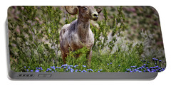 Blooms And Bighorn In Anza Borrego Desert State Park  Portable Battery Charger