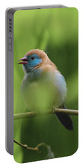 Portable Battery Charger featuring the photograph Blue Bird Chirping by Raphael Lopez