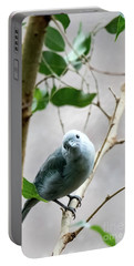 Blue-grey Tanager Portable Battery Charger