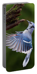 Portable Battery Charger featuring the photograph Blue Jay In Flight by Mircea Costina Photography