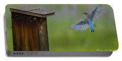 Bluebird Feeding Time Portable Battery Charger by John Roberts