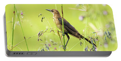 Boat-tailed Grackle Female Portable Battery Charger