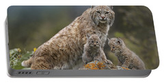 Bobcat Mother And Kittens North America Portable Battery Charger