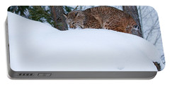 Bobcat On Snow Hill Portable Battery Charger by Steve McKinzie