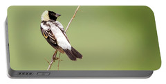 Bobolink Looking At You Portable Battery Charger