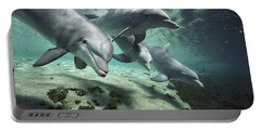 Four Bottlenose Dolphins Hawaii Portable Battery Charger