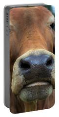 Brahman Cattle Closeup Portrait Portable Battery Charger
