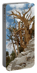 Bristlecone Pine 6 Portable Battery Charger