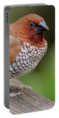 Portable Battery Charger featuring the photograph Brown Bird by Raphael Lopez