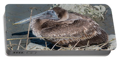 Brown Pelican 3 March 2018 Portable Battery Charger