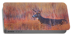 Buck Deer In Morning Sunlight Portable Battery Charger