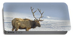 Bull Elk In Snow Portable Battery Charger