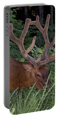 Bull Elk Portrait Grazing Portable Battery Charger