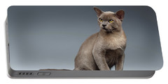 Burma Cat Sits And Loocking Up On Gray Portable Battery Charger