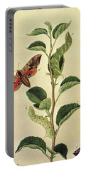 Butterflies, Caterpillars And Plants Plate Xii  Portable Battery Charger