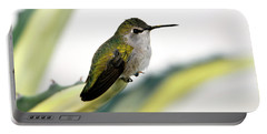 Calliope Hummingbird On Agave Portable Battery Charger