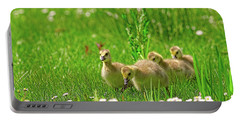 Portable Battery Charger featuring the photograph Canada Goose Goslings In A Field Of Daisies by Sharon Talson