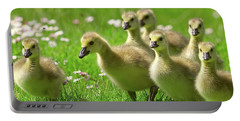 Portable Battery Charger featuring the photograph Canada Goose Goslings by Sharon Talson