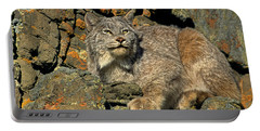 Portable Battery Charger featuring the photograph Canadian Lynx On Lichen-covered Cliff Endangered Species by Dave Welling