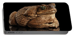 Cane Toad - Bufo Marinus, Giant Neotropical Or Marine Toad Isolated On Black Background Portable Battery Charger