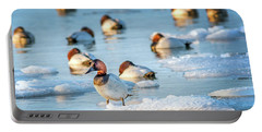 Canvasback Duck Standing On Ice In The Chesapeake Bay Portable Battery Charger