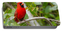 Cardinal 147 Portable Battery Charger by Michael Fryd