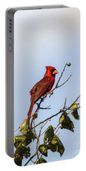 Portable Battery Charger featuring the photograph Cardinal On Treetop by Robert Frederick